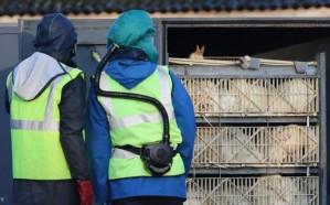 البيئة: إصابة جديدة بإنفلونزا الطيور في هذه المحافظة