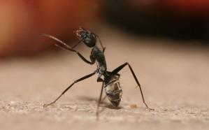 مفاجأة غريبة.. «السكر» يطرد «النمل»!