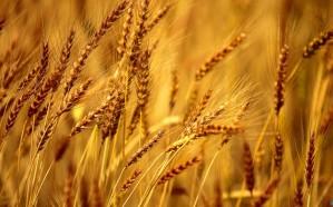 «الحبوب» ترسي الدفعة الثالثة من القمح المستورد لهذا العام