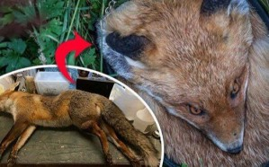بريطانية تصنع حقائب مرعبة من الحيوانات الميتة وتبيعها بأثمان باهظة