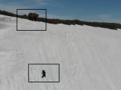 """فيديو.. دب يتسلق جبل ثلجي يثير إعجاب رواد """"تويتر"""""""