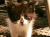 مفاجأة.. «قطة» تنضم لصفوف الشرطة الأمريكية (صورة)