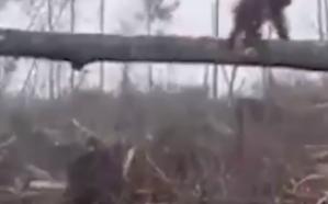 «قرد» يهاجم جرافة تهدم منزله في الغابة ويجبرها على التوقف