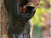بالصور.. أغرب الأماكن التي بنت بها الطيور أعشاشها