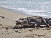 تمساح يلتهم امرأة ورضيعها على ساحل بحيرة في أوغندا