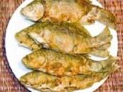الأسماك تحسن الذاكرة وتعالج الاكتئاب وتقلل علامات الشيخوخة