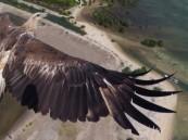 صورة لنسر تفوز بمسابقة للتصوير بالطائرات من طيار