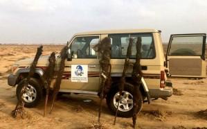ضبط مخالفين يصطادون الطيور بمنطقة محظورة في مكة