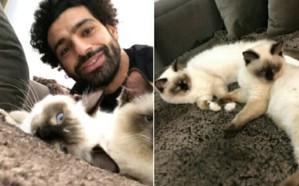 هكذا علق محمد صلاح على تصدير القطط والكلاب المصرية