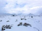 فيديو.. تساقط كثيف للثلوج على مرتفعات الظهر في تبوك