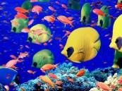اكتشاف نوع من الأسماك يمتلك قدرات ذهنية مدهشة