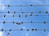 لماذا لا تُصعَق الطيور بالكهرباء عند وقوفها على أسلاك الضغط العالي؟ (فيديو)