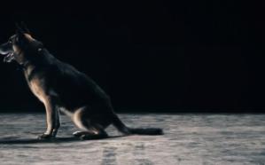لماذا تُستخدم «الكلاب» في عمليات التفتيش وكشف الممنوعات؟