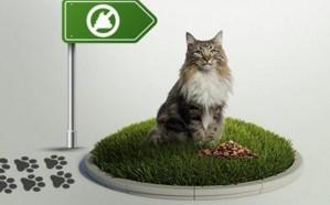 «البلديات» تُحذر من عدم إزالة مخلفات الحيوانات الأليفة.. مخالفة تُعرضك للغرامة