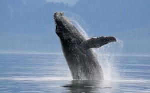 """مصر تعلق على فيديوهات صوت """"الحوت الأزرق"""" المرعب"""