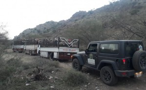 مصادرة 4 شاحنات محملة بالحطب والفحم المحلي في عسير