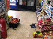 إتلاف أكثر من 300 كيلو من المواد الغذائية الفاسدة خلال جولات رقابية بخميس مشيط