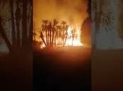 فيديو: اندلاع حريق هائل بمزارع نخيل غرب نجران.. والدفاع المدني يباشر