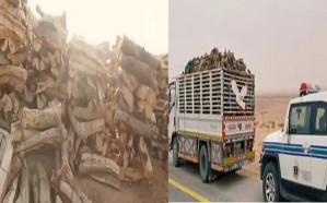 ضبط أكثر من 113 طن حطب محلي قبل بيعها في عدة مناطق