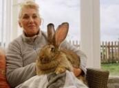 """سرقة """"أضخم أرنب في العالم"""" وهذه مكافأة من يعيده"""