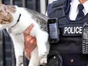 القبض على قط يهرب المخدرات إلى المساجين في بنما