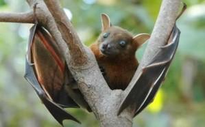 نوع جديد من كورونا يظهر على خفاشات بريطانية