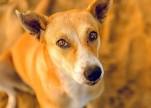 دراسة حديثة: الكلاب تستطيع معرفة خداع البشر!
