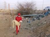 أمانة جدة تزيل حظائر ومسالخ مخالفة وتصادر (21) رأساً من الأغنام