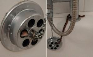 شاهد.. ثعبان يخرج على أمريكي خلال استحمامه