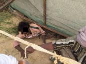 بالصور| الشرقية.. مخالفون للإقامة والعمل يحاولون الهرب والتخفي من رجال الأمن
