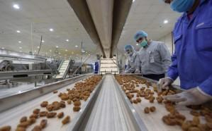 «الغذاء والدواء»: خلو منتجات تمور المدينة المنورة من بقايا المبيدات