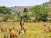 تقرير عالمي يُحذر: كوكب الأرض فقد 60% من الحيوانات خلال 4 عقود