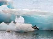 وحش جليدي بحجم مدن يبدأ التحرك.. ويثير خوفاً عالمياً