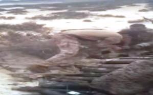 بالفيديو.. القوات البحرية تعثر على صواريخ ومقذوفات خبأها الحوثيون في جزيرة حدودية