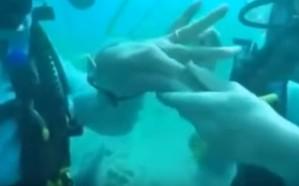 شاهد.. مصري يعقد قرانه على بريطانية تحت مياه البحر الأحمر
