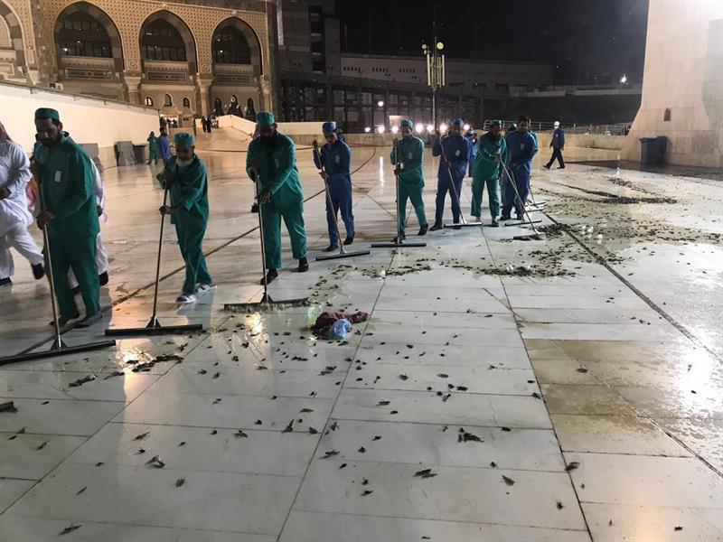 كشف ملابسات فيديو انتشار الحشرات في ساحات الحرم المكي