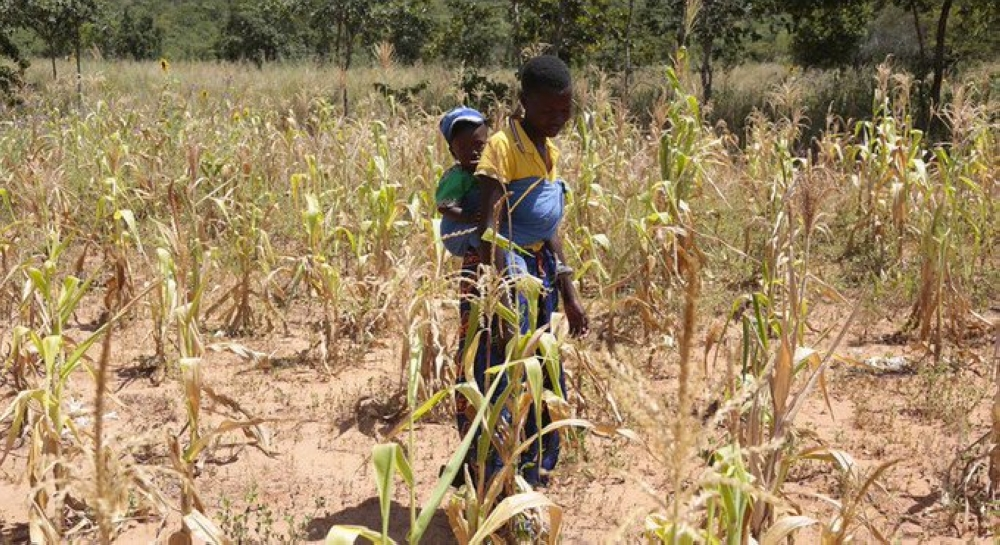 تقرير أممي: الأمن الغذائي العالمي في خطر