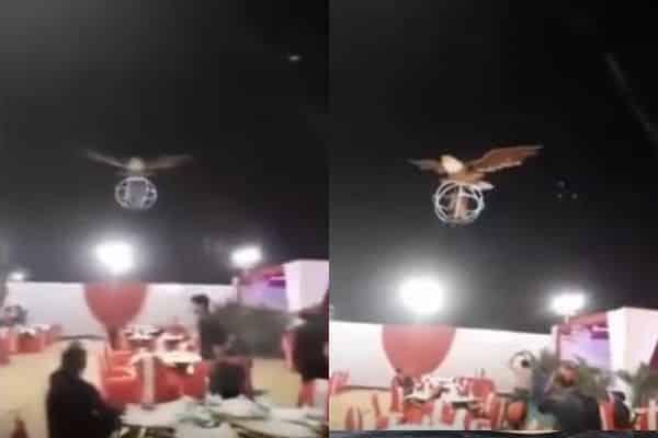 شاهد..عروسان يهبطان إلى حفل زفافهما من السماء عبر طائر عملاق!