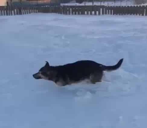 شاهد.. مشهد مروع.. موجة برد قوية تجمِّد الحيوانات في مكانها بكازاخستان