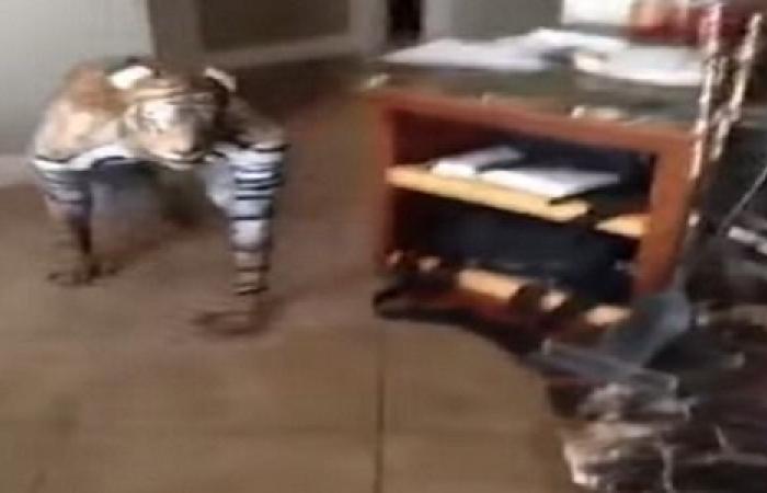شاهد.. رجل يرعب حيواناته الأليفة بطريقة وحشية