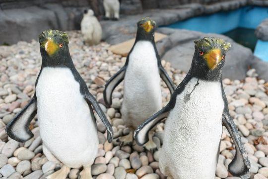 حديقة حيوان بريطانية تعرض طيور بطريق بلاستيكية (فيديو)