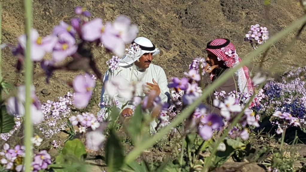 بالصور .. الزهور تكسو جبال السرداح والقويعية